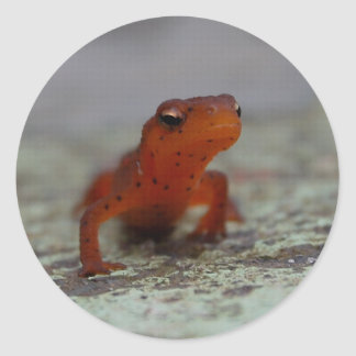 Eastern Newt sticker