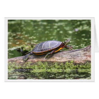 Eastern Painted Turtle Card