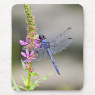 Eastern Pondhawk Mouse Pad