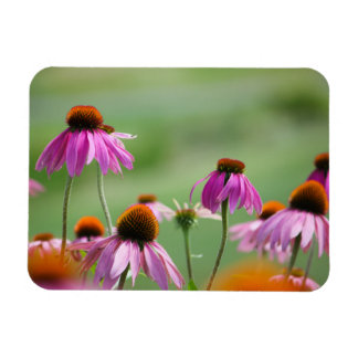 Eastern Purple Coneflowers Magnet