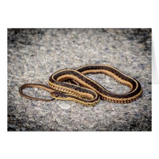 Eastern Ribbon Snake (Garter Snake) Card