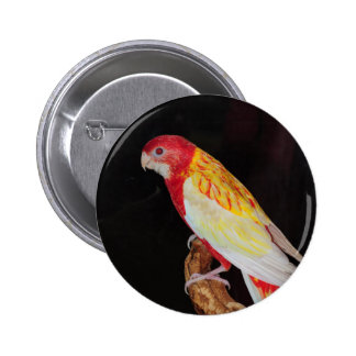 Eastern Rosella parrot 2 Inch Round Button