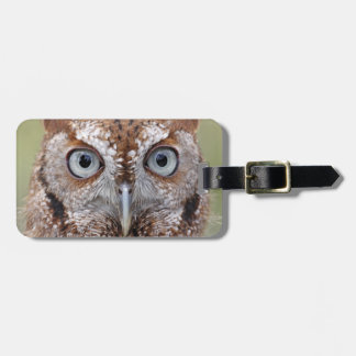 Eastern Screech Owl Photograph Luggage Tag