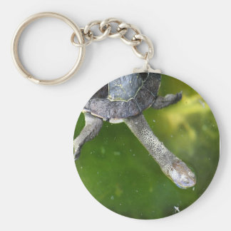 Eastern Snake-Necked Turtle Key Chains
