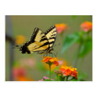 Eastern Tiger Swallowtail Butterfly Postcard