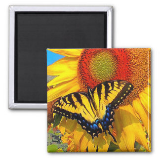 Eastern Tiger Swallowtail , magnet