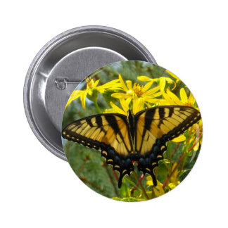 Eastern Tiger Swallowtail on Yellow Daisies 2 Inch Round Button