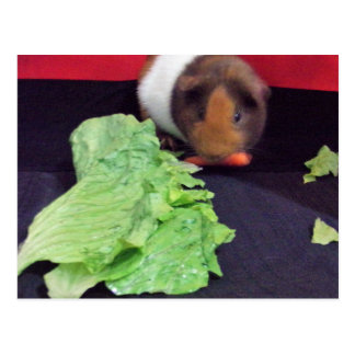 eating guinea pig card
