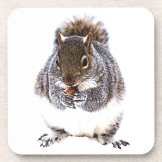 Eating Squirrel Coasters