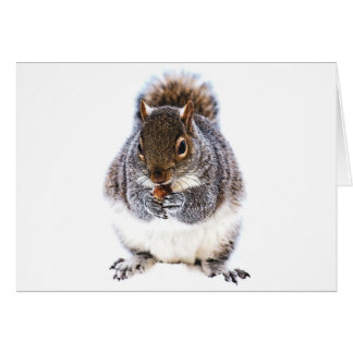 Eating Squirrel Greeting Card