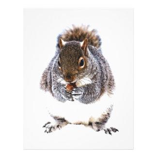Eating Squirrel Letterhead Design