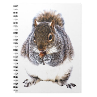 Eating Squirrel Notebooks