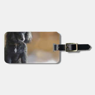 Ebony Luggage Tag