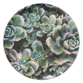 Echevaria Succulents Photographic Melamine Plate