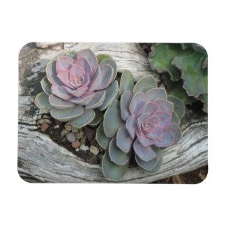 Echeveria Succulent Magnet