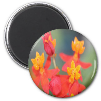 Echeveria Succulent Red and Yellow Flower 2 Inch Round Magnet