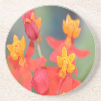 Echeveria Succulent Red and Yellow Flower Beverage Coaster