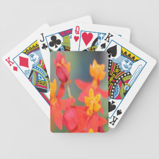 Echeveria Succulent Red and Yellow Flower Bicycle Playing Cards