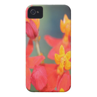 Echeveria Succulent Red and Yellow Flower Case-Mate iPhone 4 Cases
