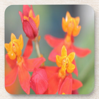 Echeveria Succulent Red and Yellow Flower Drink Coaster