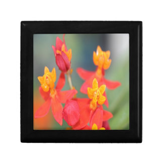 Echeveria Succulent Red and Yellow Flower Gift Box