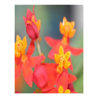 Echeveria Succulent Red and Yellow Flower Letterhead