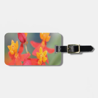 Echeveria Succulent Red and Yellow Flower Luggage Tag