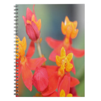 Echeveria Succulent Red and Yellow Flower Notebook