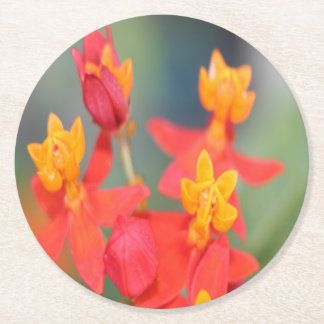 Echeveria Succulent Red and Yellow Flower Round Paper Coaster