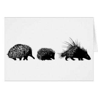 Echidna, hedgehog, porcupine greeting card