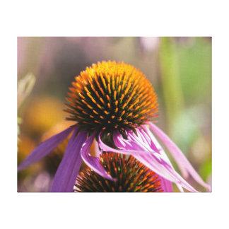 Echinacea Purpurea Purple Coneflower Canvas Print