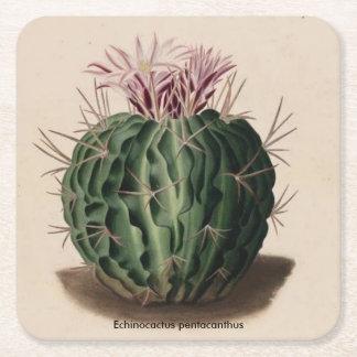 Echinocactus pentacanthus Cactus Square Paper Coaster
