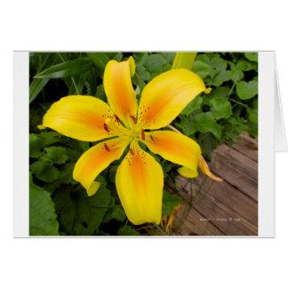 Éclat de jaune cartes de vœux