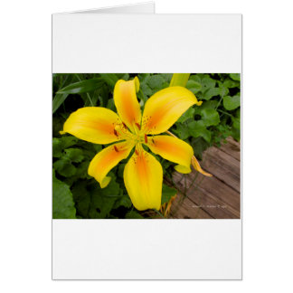 Éclat de jaune carte de vœux