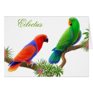 Eclectus Birds Greeting Card