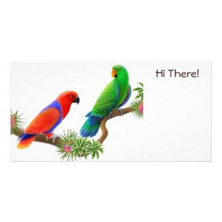 Eclectus Birds Photo Card