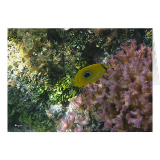 Eclipse Butterfly Fish Swimming By Coral Cards