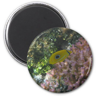 Eclipse Butterfly Fish Swimming By Coral Fridge Magnet