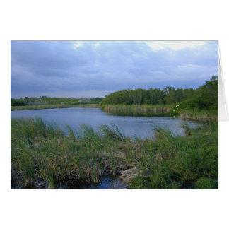 Eco Pond, Florida Everglades, 1999 Card