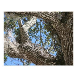 écorce de chêne vivant et photographie de nature d