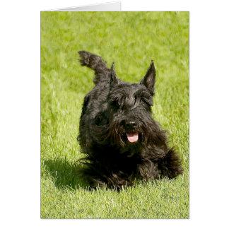 Écossais Terrier fonctionnant librement Carte De Vœux