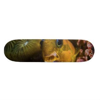 Ecsenius Midas Benny Fish Skateboard Decks