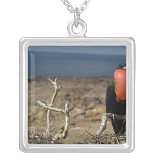 Ecuador, Galapagos, Genovesa Island. Prince Silver Plated Necklace