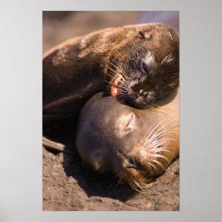 Ecuador, Galapagos Islands National Park, Poster