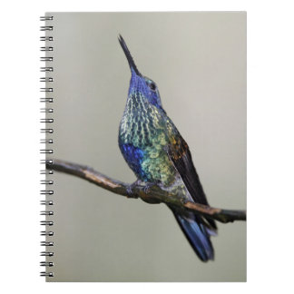 Ecuador, Tandayapa Bird Lodge. Sparkling Spiral Notebook