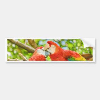 Ecuadorian Parrots at Zoo, Guayaquil, Ecuador Bumper Sticker