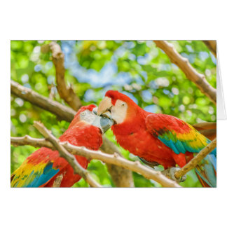 Ecuadorian Parrots at Zoo, Guayaquil, Ecuador Card