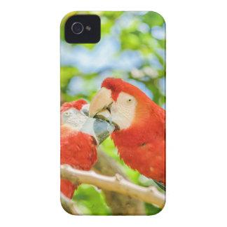 Ecuadorian Parrots at Zoo, Guayaquil, Ecuador iPhone 4 Case