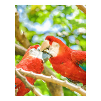 Ecuadorian Parrots at Zoo, Guayaquil, Ecuador Letterhead
