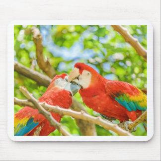 Ecuadorian Parrots at Zoo, Guayaquil, Ecuador Mouse Pad